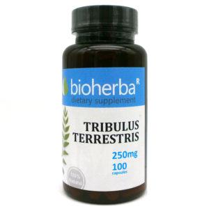 ТРИБУЛУС ТЕРЕСТРИС БИОХЕРБА КАПСУЛИ 250МГ. (BIOHERBA TRIBULUS TERRESTRIS) | Цена Информация
